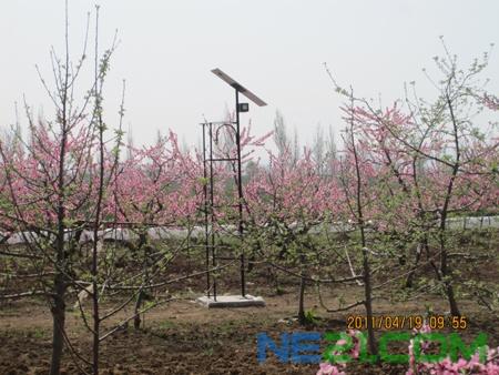 陕西千阳县:太阳能灭虫器亮相苹果园