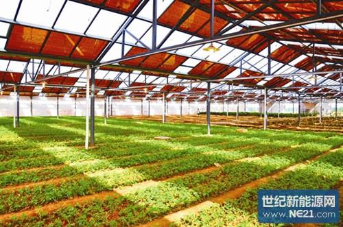 光伏发电技术应用于蔬菜大棚