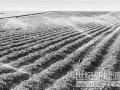 高效节水灌溉面积指标超额完成