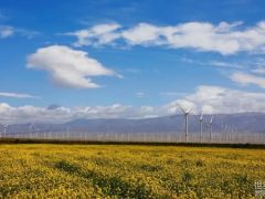 一路向西 零距离走近中国最大单体风电场!