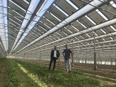 法国光伏温室年产电力和芦笋分别达 3.1 吉瓦时 和 4 吨/公顷