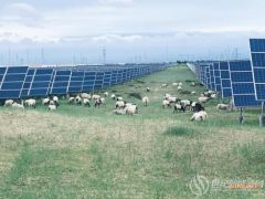 """""""光伏+羊"""",发电致富两不误"""